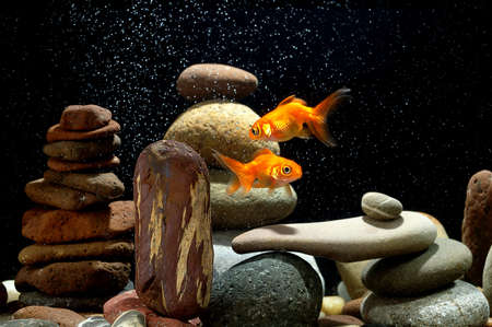 couple goldfish in aquarium over well-arranged zen stone and nice bokeh of bubbles  Stock Photo - 12805345