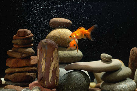 couple goldfish in aquarium over well-arranged zen stone and nice bokeh of bubbles Stock Photo - 12805351