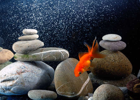 goldfish in aquarium over well-arranged zen stone and nice bokeh of bubbles Stock Photo - 12805329