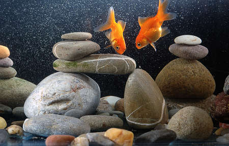 fishtank: couple goldfish in aquarium over well-arranged zen stone and nice bokeh of bubbles