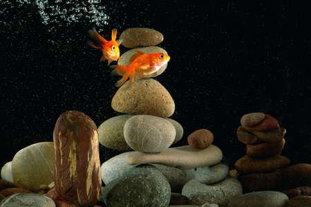 goldfish in aquarium over well-arranged zen stone and nice bokeh of bubbles  Standard-Bild