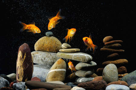 goldfish in aquarium over well-arranged zen stone and nice bubbles  photo