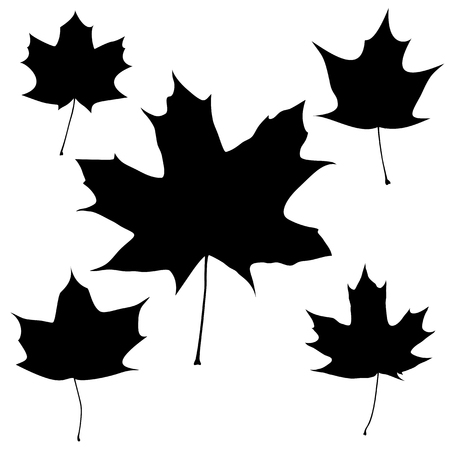 Set of vector black maple leaves outline on the white background for your design