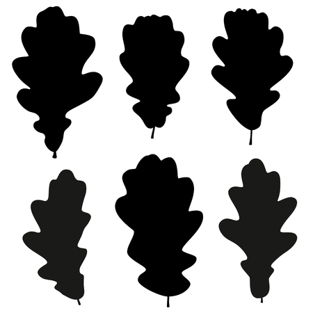 Set of vector black oak leaves outline on the white background for your design