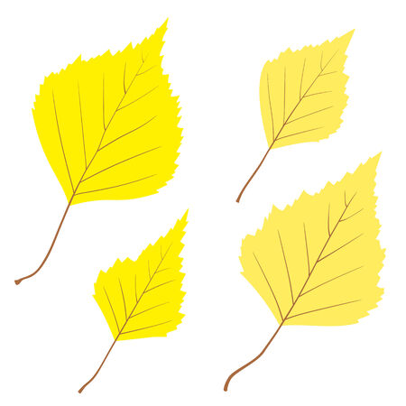 Set of vector birch leaves on the white background for your design