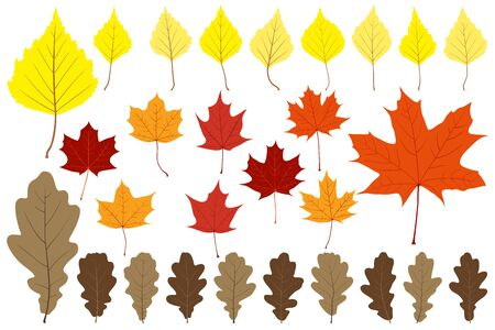 claret: Set of leaves on the white background for your design