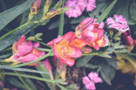multiple: pink flowers over green leaves background