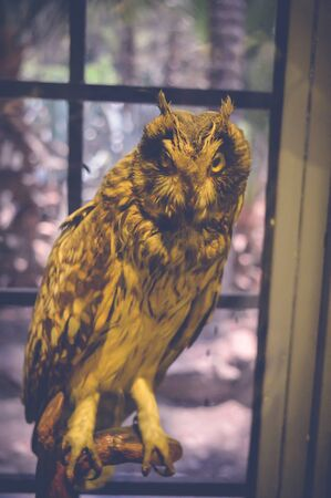 cairo, egypt, may 6, 2017: owl statue inside hunting museum of muhammad ali at manial palace