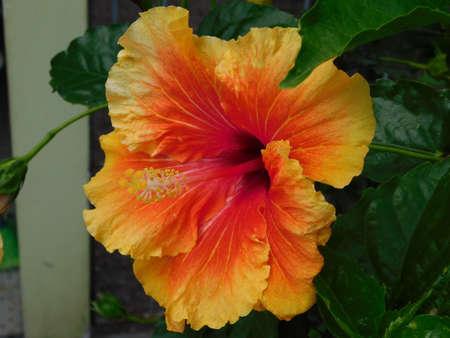 nature beauty: flower garden close landscape nature red beauty Stock Photo
