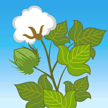 Cotton plant close up on blue background Illustration