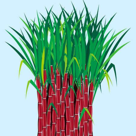 gran angular: las plantas de ca�a de az�car crecen en el campo Vectores