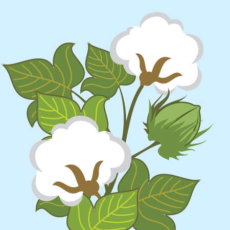 cotton plant: Cotton Plant Closeup Illustration