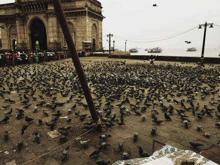 Gateway of India Mumbai where the people are give food for Birdgive food for Bird Stock Photo