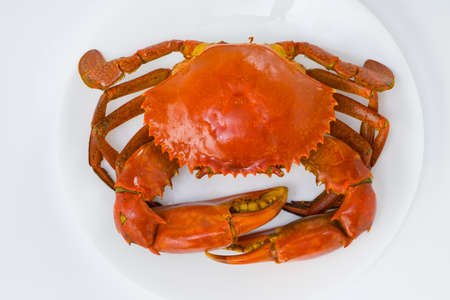 cooked mud crab, arranged on a white round ceramic plate with white textured background,top view.