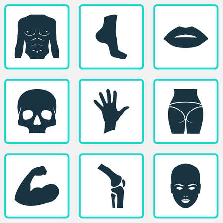 Includes Icons Such As Knee, Buttocks, Head And Other.  Physique Icons Set.