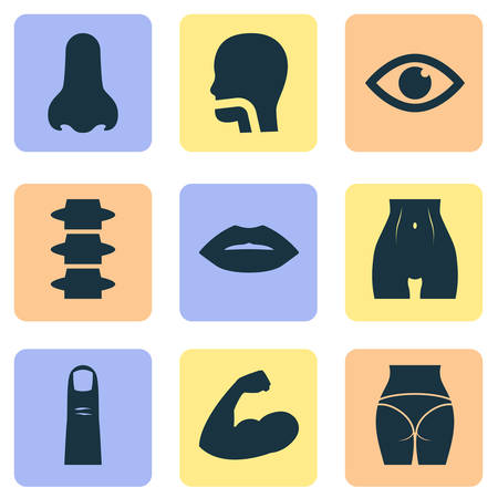 Body icons set with spine, lip, belly and other slim   elements. Isolated vector illustration body icons.