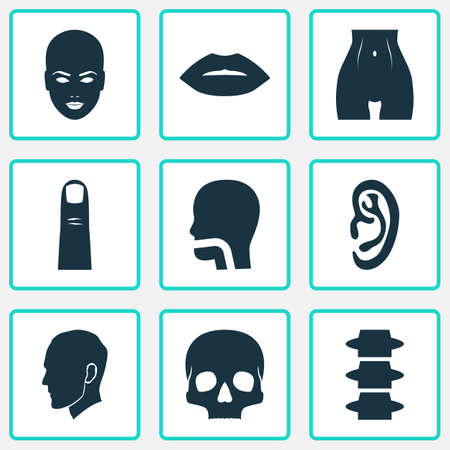 Physique icons set with lip, belly, ear and other breath   elements. Isolated vector illustration physique icons. Illustration