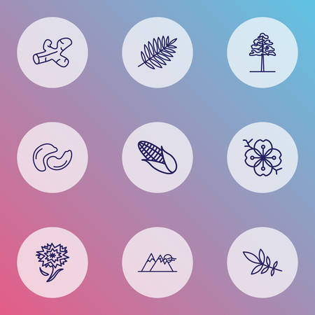 Nature icons line style set with ash tree leaf, mountain, carnation and other turmeric  elements. Isolated vector illustration nature icons.