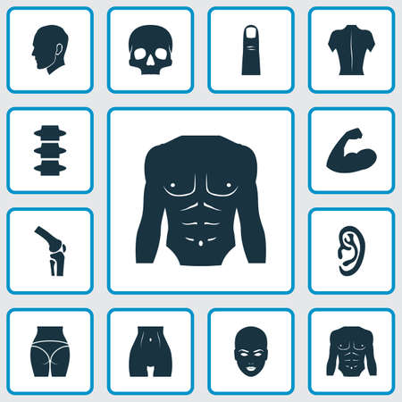Physique icons set with joint, spine, back and other muscle