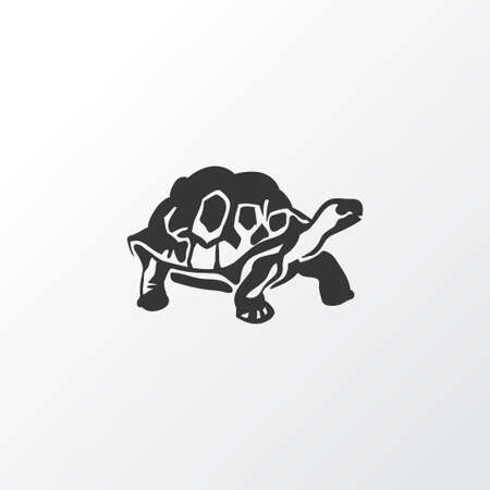 Turtle icon symbol. Premium quality isolated tortoise element in trendy style.