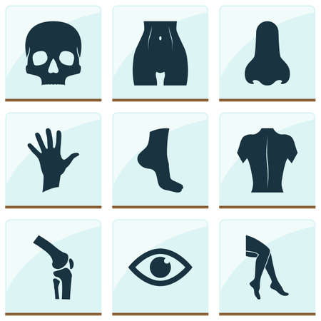 Physique icons set with leg, palm, eye and other foot   elements. Isolated vector illustration physique icons.