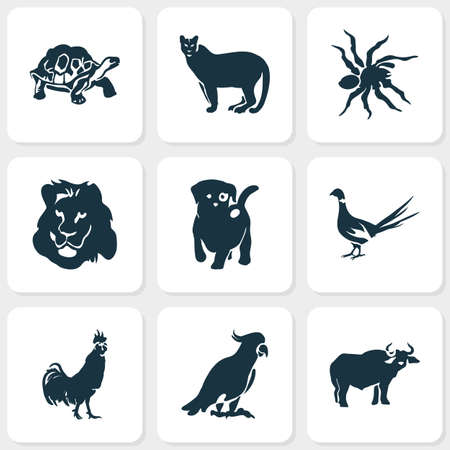 Animal icons set with spider, lion, pheasant and other buffalo