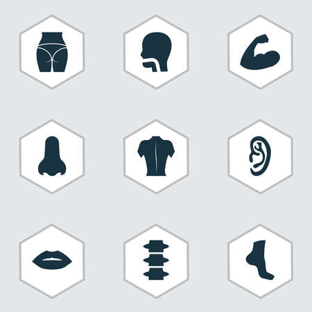 Part icons set with back, spine, nose and other backbone elements. Isolated vector illustration part icons.