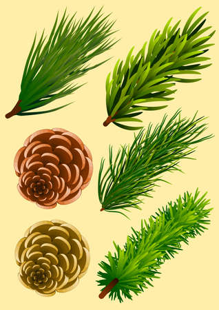 Pine elements, with different branches and pinecones Stock Illustratie