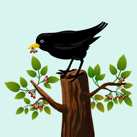 Frame with blackbird on a tree with leaves and red berries