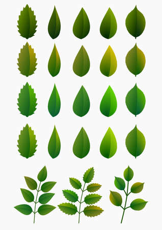 Set of tree leaves, with different styles and shades. Isolated elements. Vector illustration.
