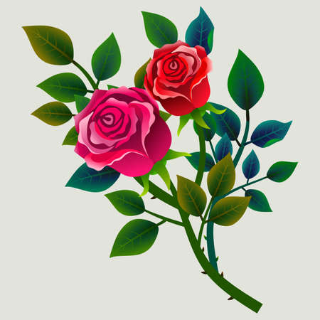 Bouquet of roses isolated on light background. Vector illustration. Ideal to integrate in other floral compositions.