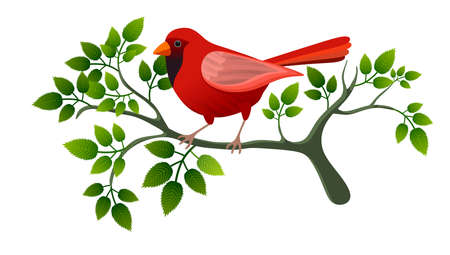 Illustration with red bird on tree branch, isolated on white background. Ideal for use on custom cards or other media. Foto de archivo - 112217333