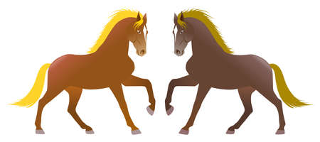 Two horses in symmetry, isolated on withe background. Animals. Illustration. Stock Photo