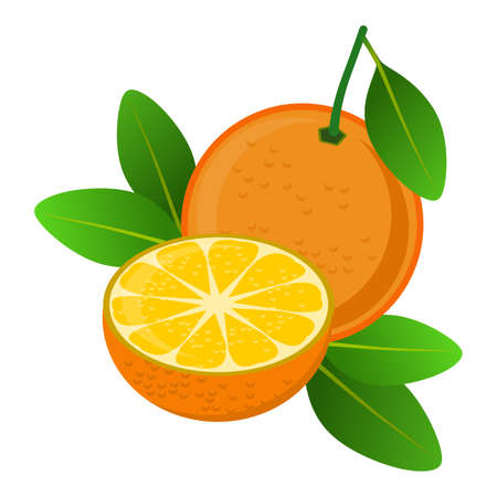 Frame with stylized orange and its leaves, isolated on white background. Illustration. Design. Banco de Imagens - 119925127