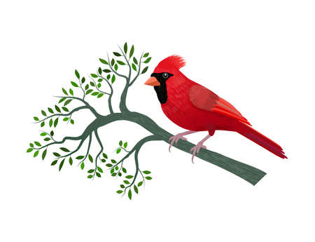 Floral frame with a cardinal bird on a branch with leaves isolated on withe background. Illustration. Digital art.