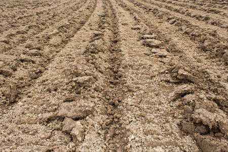 plough: Plough agriculture field before sowing. Stock Photo
