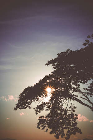 fading: Silhouettes  of tree against the sunlight. Vintage picture.
