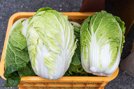 Fresh Chinese cabbage in the basket