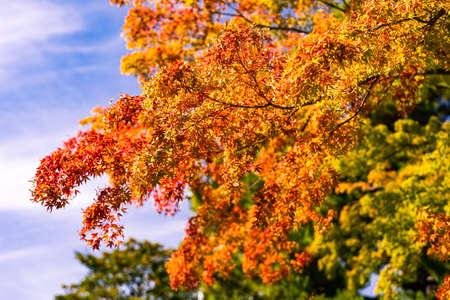 Colorful foliage in the autumn park. Beautiful Autumn Leaves.