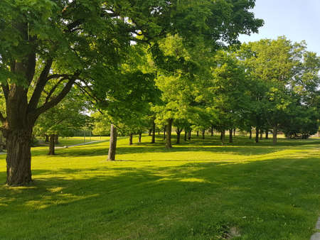Lush green trees in the park in the heat of the city 写真素材 - 106544694