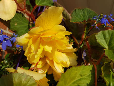 Beautiful yellow and purple blooming flowers in the summer