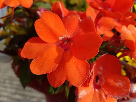 Beautiful orange blooming flowers in the summer 写真素材