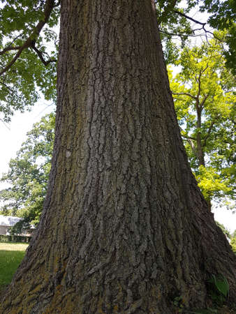 Trunk of the lush green tree