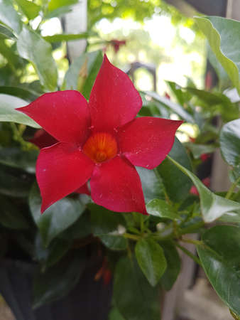 Beautiful red blooming flower in the summer