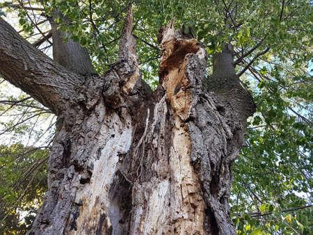 Tree with broken trunk 写真素材 - 106545501