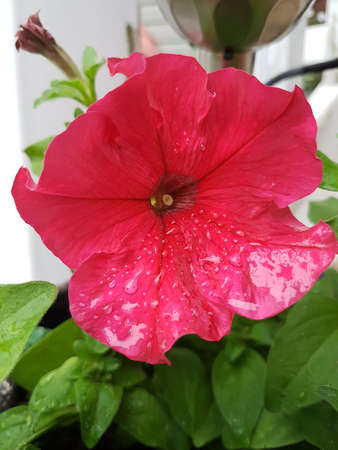 A beautiful blossoming red flower in summer