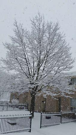 Heavy snow in winter Imagens