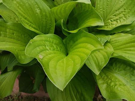 Lush green leaves of the summer seaso