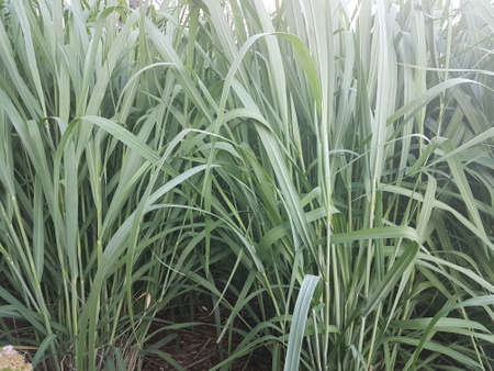 Lush green weeds 写真素材 - 104216151