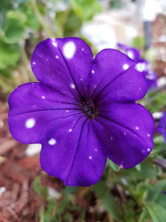 Flower of the season